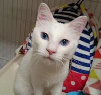 深く青い目の子は! - 家なき猫