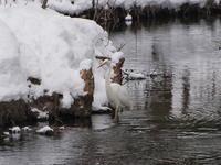 研究林の池で(1/26) - 今日の鳥さんⅡ