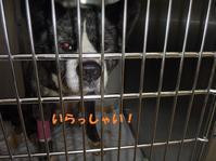 ちょっと笑顔が~♪ - もももの部屋(怖がりで攻撃性の高い秋田犬のタイガ、老犬雑種のベスの共同生活&保護活動の記録です・・・時々お空のモカも登場!)