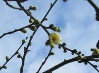 春の足音 - 山の花、町の花