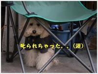 大、叱られてるってことがわかってるの??隠れるのは条件反射??(ノ ∀`*)σプププwww - さくらおばちゃんの趣味悠遊