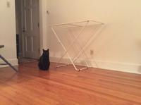 猫と物干し - にゃんこと暮らす・アメリカ・アパート
