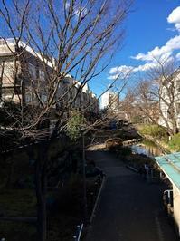 今と昔が混在する街。──「清澄白河」 - Welcome to Koro's Garden!
