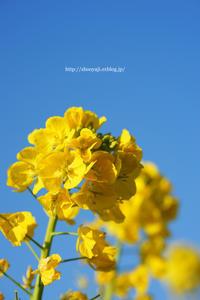 春の訪れ・・・(写真部門) - ショーオヤジのひとり言