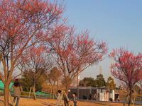 """""""春近し""""と予感しながら・・・・・! - 一場の写真 / 足立区リフォーム館・頑張る会社ブログ"""