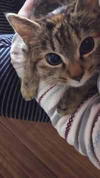 家猫第一歩 - 猫に目薬