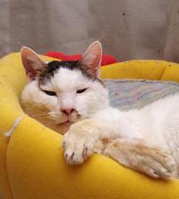 おいさんは、眠い・・・ - ぶつぶつ独り言2(うちの猫ら2018)