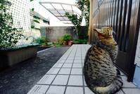 ロックとサスペンス - 写真家 田島源夫ブログ『しゃごころでっしゃろ!』