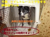 トイレトレーニングがんばり中~! - もももの部屋(怖がりで攻撃性の高い秋田犬のタイガ、老犬雑種のベスの共同生活&保護活動の記録です・・・時々お空のモカも登場!)