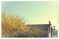 蝋梅と空と倉庫。 - Yuruyuru Photograph