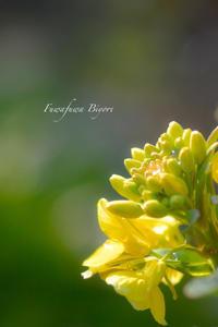 春よこい ♡ - ふわふわ日和