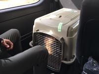 犬連れのハードル - やませどうぶつ病院スタッフブログ