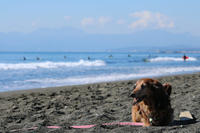 砂浜に興味津々☆ - 湘南気まま生活♪