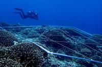17.2.4日々、サンゴに携わり - 沖縄本島 島んちゅガイドの『ダイビング日誌』