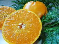 究極の柑橘『せとか』平成29年度の収穫の様子!後編:選び抜いたものだけが『プリンセスせとか』なんです - FLCパートナーズストア