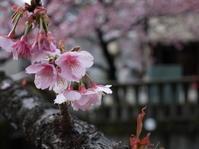 春はまだか - いんちきばさらとマクガフィン…のアーカイヴ