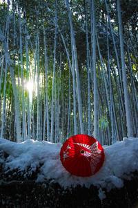 京都1/15 嵯峨野雪景色 - 写真部