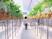 収穫だい - 1/365 - WEBにしきんBlog