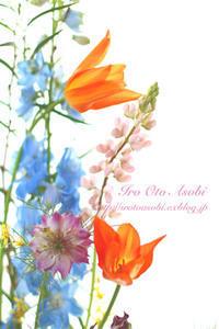 Dancing tulips - 色音あそび