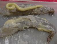 海老フライ寿司 - うまこの天袋