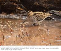 舞岡公園 2017.2.5 - 鳥撮り遊び