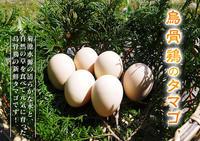熊本県菊池水源で育った烏骨鶏の新鮮タマゴ!数量限定で販売中! - FLCパートナーズストア
