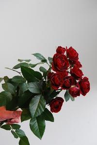 フラワーバレンタイン - 花と暮らす店 木花 Mocca