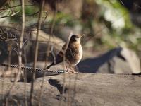 『鳥達と自然発見館の雛人形達・・・♪』 - 自然風の自然風だより