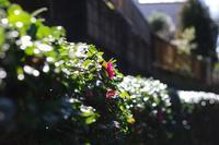春へ - day pHoto