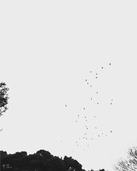 心撮 - Daydream