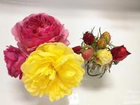 冬剪定しました。 - 春&ナナと庭の薔薇