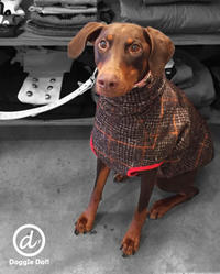 Hello Berg !! - Doggie Do!! / good dog and hello cat !!
