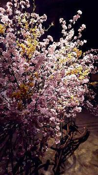 桜 ディスプレイライトアップ - クリエイティブlife