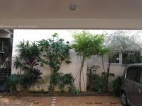 沖縄おもひで旅行〜植物編 - ☆photoフォトふぉと☆
