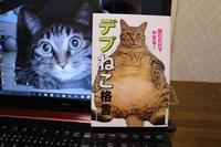 VIVA!デブねこさん? - 長老猫とマミーの徒然日記