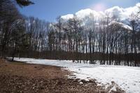 冬の森へ - D.S.D.