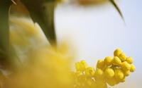 ヒイラギの香り - 赤煉瓦洋館の雅茶子
