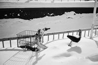 放置自転車とアレサ・フランクリンの引退報道 - 照片画廊