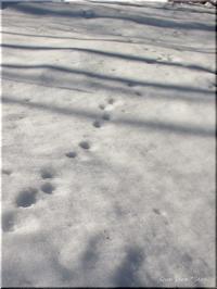 森を、歩く ノルディックウォーキング - Que Sera *Sera