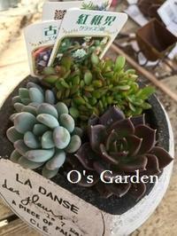 極寒 - O's garden へ ようこそ~ ♪
