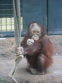 2月12日(日)違和感 - ほのぼの動物写真日記