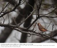 さくら草公園 2017.2.10(3) - 鳥撮り遊び