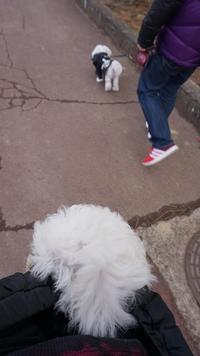お散歩~&シャンプーDay(いっちゃん編)♪ - いちご&ニコの photo 日記♪