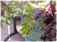 Love Lime Green Color - Gardener*s Diary