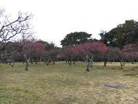(豊中名所)服部緑地 梅林 / Hattori Ryokuchi Park - Macと日本酒とGISのブログ