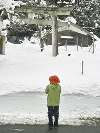 58豪雪・・・二か月で、雪ザクラから夜桜。 - 朽木小川より 「itiのデジカメ日記」 高島市の奥山・針畑からフォトエッセイ