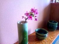 526、ひかん桜を飾る;春の兆し - 五十嵐靖之 趣味の写真と短歌