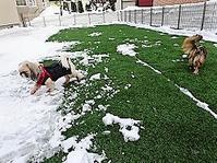 放牧場、積雪ゼロだよー - わんわん・パラダイス
