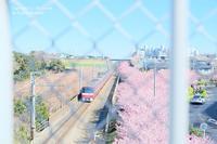 桜と電車と金網と - カメラをもってふらふらと
