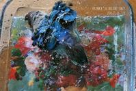 水浴びB.Bの記録→(お花畑シリーズ!?・2月12日) - FUNKY'S BLUE SKY